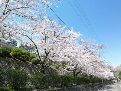 120406桜-2.jpg