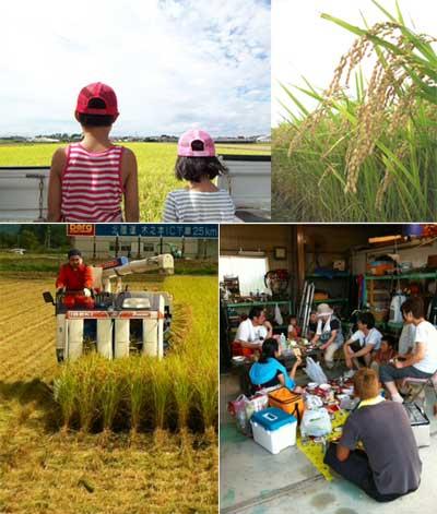 稲刈り120908-0.jpg