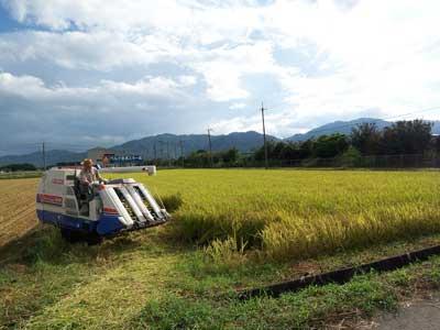 稲刈り120908_2.jpg
