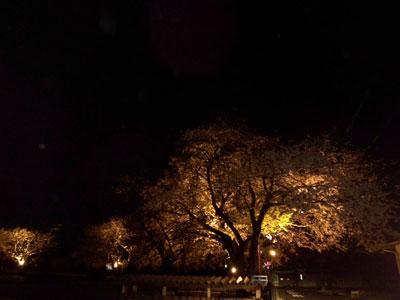 桜ライトup