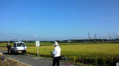 2010稲刈り.jpg