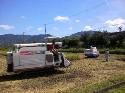 13稲刈り-2.jpg