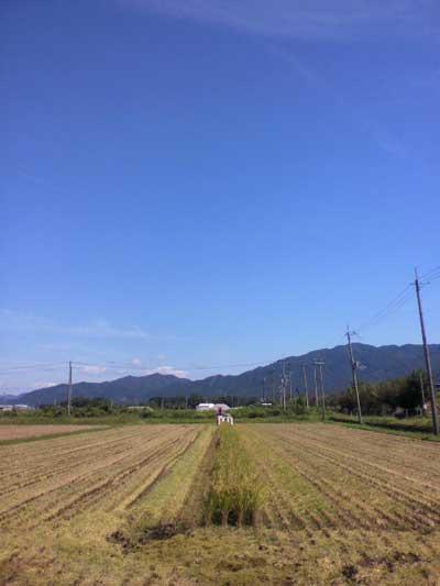 13稲刈り-3.jpg