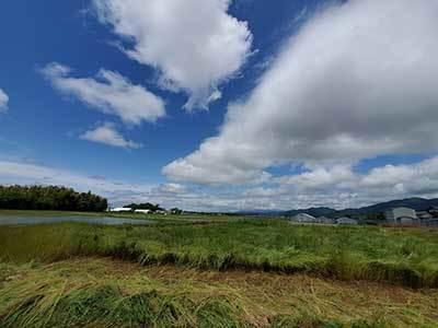 200517田植え.jpg