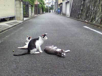 ネコ道路.jpg